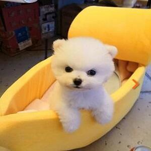 Banana Cat Bed