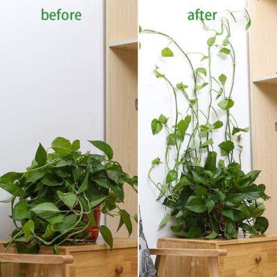 Plant Wall Climbing Fixing Clips